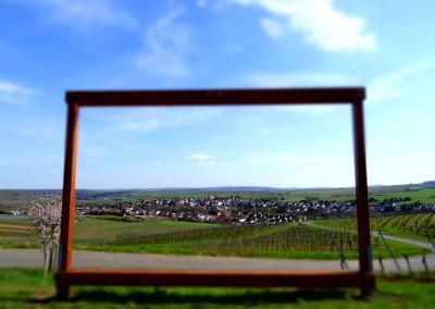 124_Windesheim im Fokus des Weinfensters